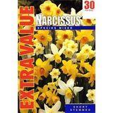 Small narcissi13