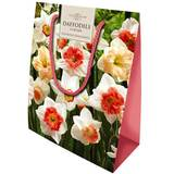 Small daffodilgs