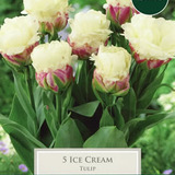 Small tulip icecream