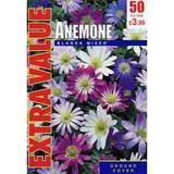 Small anemoneblandeev