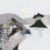 Small ace sm osprey