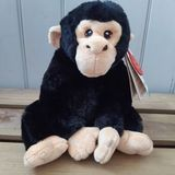 Small keel chimp