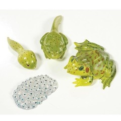 Medium_insect_lore_frog_life_cycle_figures_plastic_classroom_resource_sq