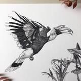 Small great hornbill print bird sky siouki