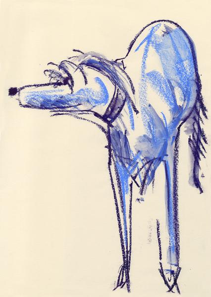 Large blue dog