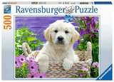 Small ravensburger fun junction toy shop perth crieff perthshire scotland jigsaw puzzle sweet golden retreiver 500 pc piece 4005556148295