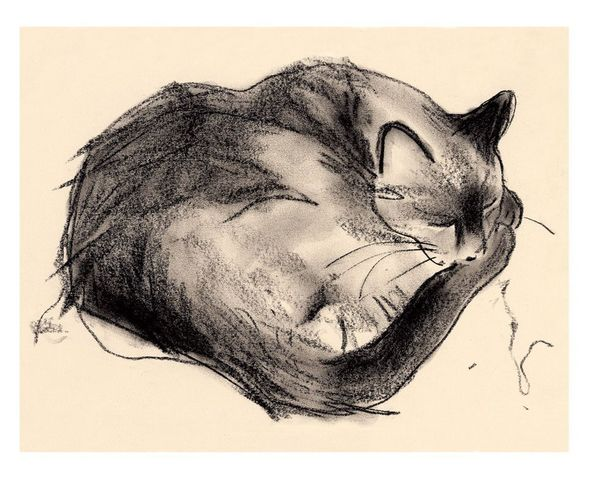 Large sleeping cat print preview