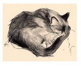 Small sleeping cat print preview