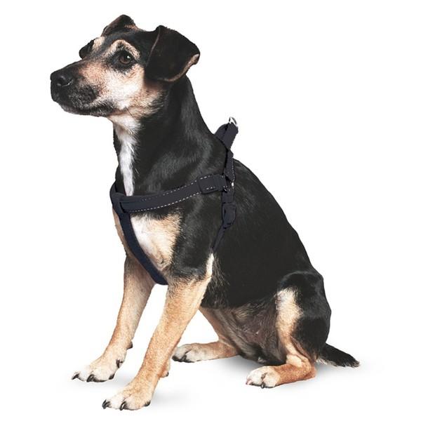 Large balck harness