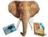 Small iam elephant
