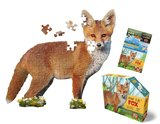 Small iam fox
