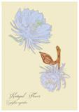 Small kadupul flower