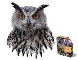 Small iam owl