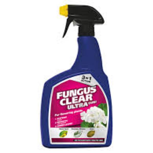 Large fungusspray